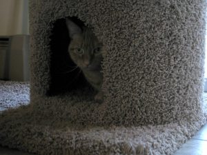 Cat Sitter in Lansdale PA