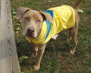 Dog Walker in Lansdale PA