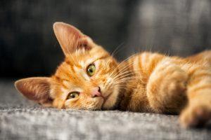 Hatfield Cat Sitter