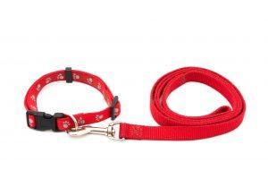 Lansdale-dog-walkers-leash