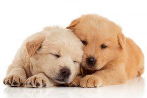 Dogs -Hatfield - Walker